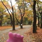 Pokémon GO: zo kun je Ditto vangen