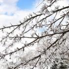 Bevroren leidingen, uitval cv en ander koudenieuws