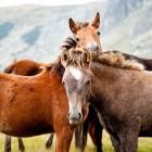 Paardenspellen, online en automatisch